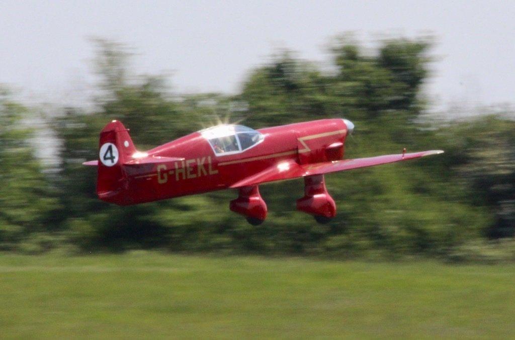 mew-gull-003